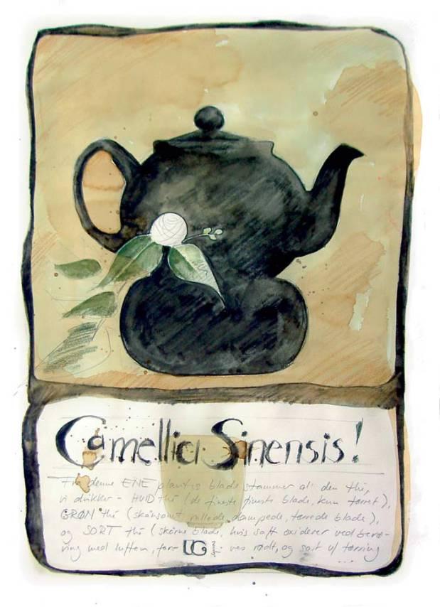 www_Camellia_sinensis_1